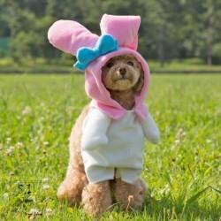 My Melody Pet Dress: Ss Costume