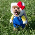 Hello Kitty Pet Dress: Ss Costume